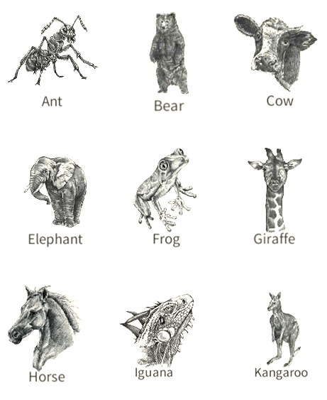 Instructions for creating Animal 4D images for kids to learn animals.jpg